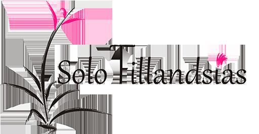 Solo Tillandsias
